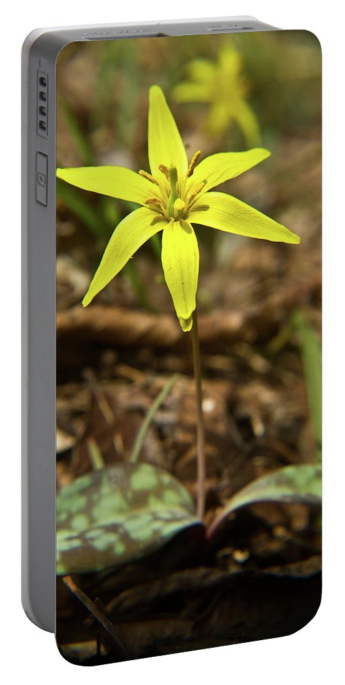 Erythronium Americanum Portable Battery Charger featuring the photograph Yellow Trout Lily 1 by Douglas Barnett