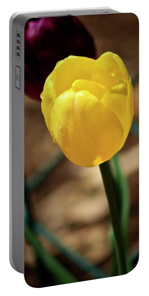 Tulip Portable Battery Charger featuring the photograph Yellow Tulip by Teresa Mucha