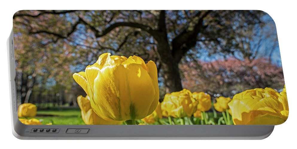 Boston Portable Battery Charger featuring the photograph Yellow Tulips In The Public Garden Boston Ma by Toby McGuire