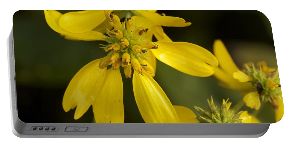 Wing Portable Battery Charger featuring the photograph Yellow Wingstem by Jack R Perry