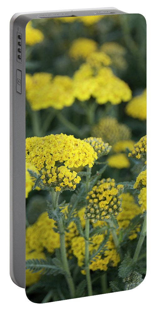 Yellow Yarrow Portable Battery Charger featuring the photograph Yellow Yarrow by Susan Wright