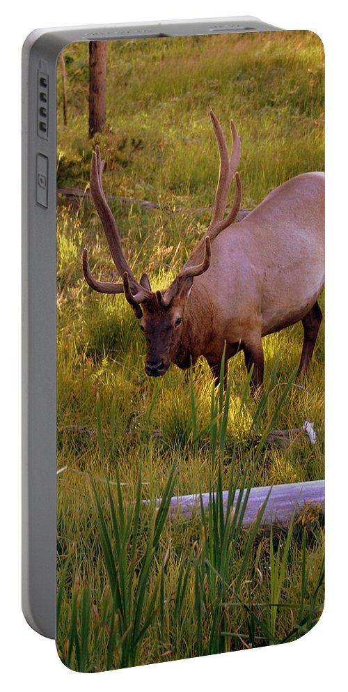 Elk Portable Battery Charger featuring the photograph Yellowstone Bull by Marty Koch