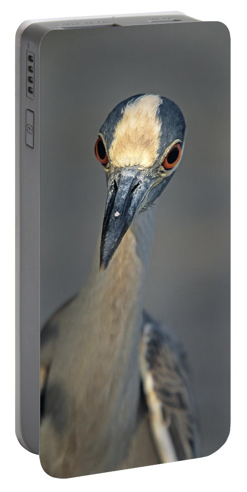 Animal Portable Battery Charger featuring the photograph Yes Can I Help by John Harmon
