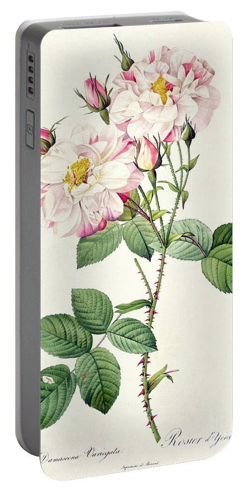 Rosa Portable Battery Charger featuring the drawing York And Lancaster Rose by Pierre Joseph Redoute
