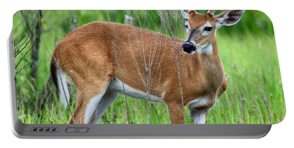 White Tail Deer Portable Battery Charger featuring the photograph Young Buck by Barbara Bowen