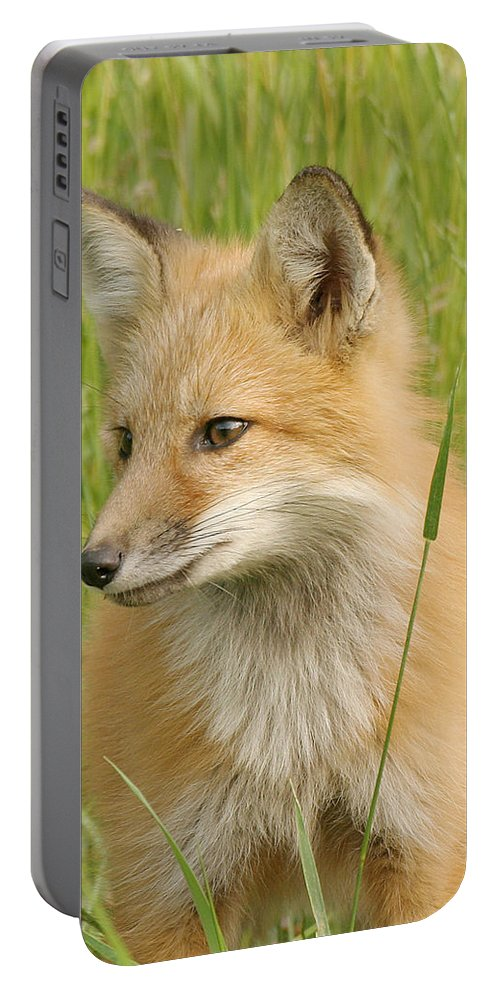 Fox Portable Battery Charger featuring the photograph Young Fox by Doris Potter