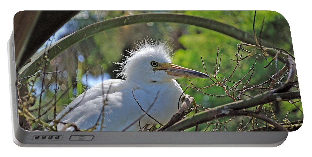 Egret Portable Battery Charger featuring the photograph Young Great Egret by Kenneth Albin