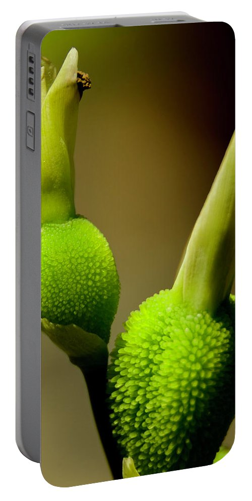 Shoots Portable Battery Charger featuring the photograph Young Green Shoots by Wolfgang Stocker