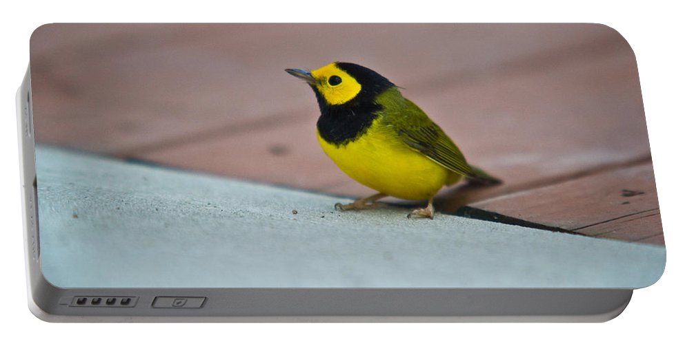 Cove Portable Battery Charger featuring the photograph Young Male Hooded Warbler 1 by Douglas Barnett