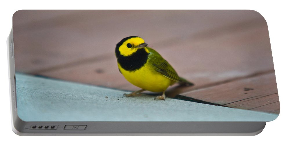 Cove Portable Battery Charger featuring the photograph Young Male Hooded Warbler 2 by Douglas Barnett