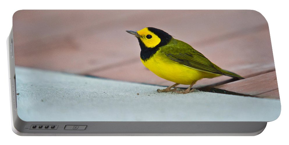 Cove Portable Battery Charger featuring the photograph Young Male Hooded Warbler 4 by Douglas Barnett