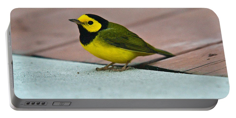 Cove Portable Battery Charger featuring the photograph Young Male Hooded Warbler 5 by Douglas Barnett