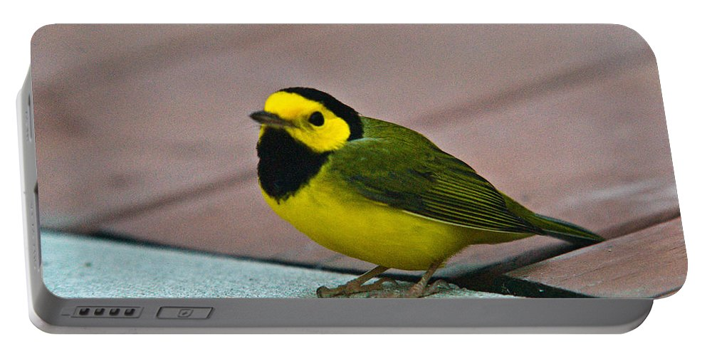 Cove Portable Battery Charger featuring the photograph Young Male Hooded Warbler 6 by Douglas Barnett