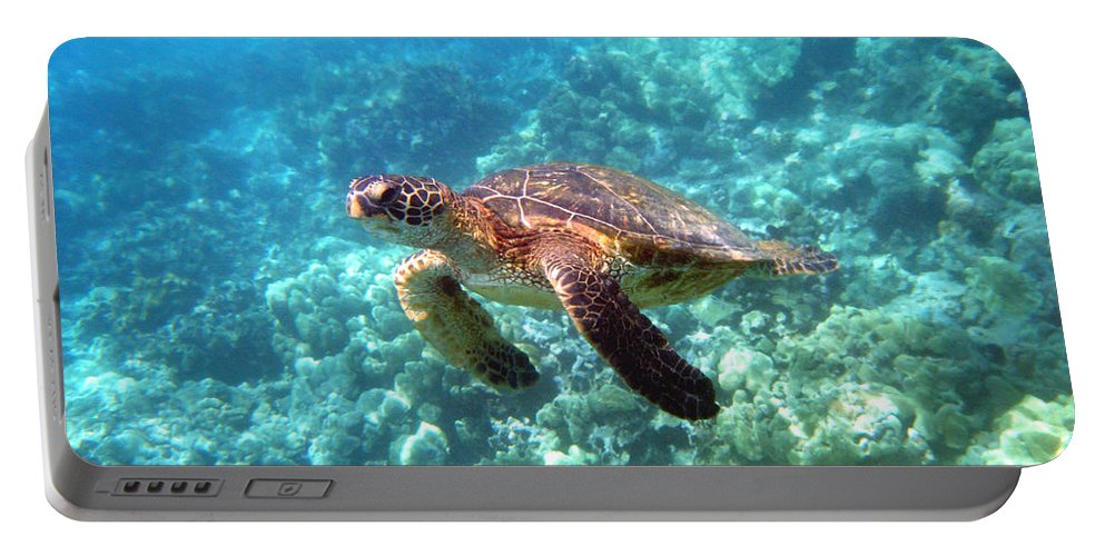 Sea Turtle Portable Battery Charger featuring the photograph Young One by Angie Hamlin