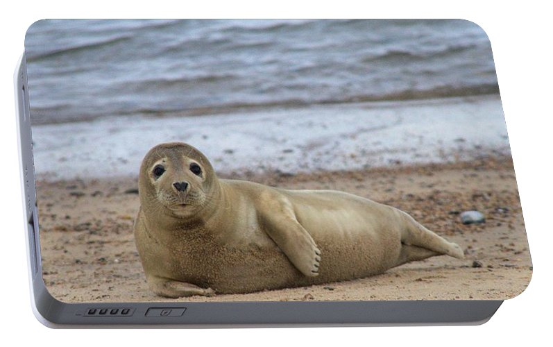 Seal Portable Battery Charger featuring the photograph Young Seal Pup On Beach - Horsey, Norfolk, Uk by Gordon Auld
