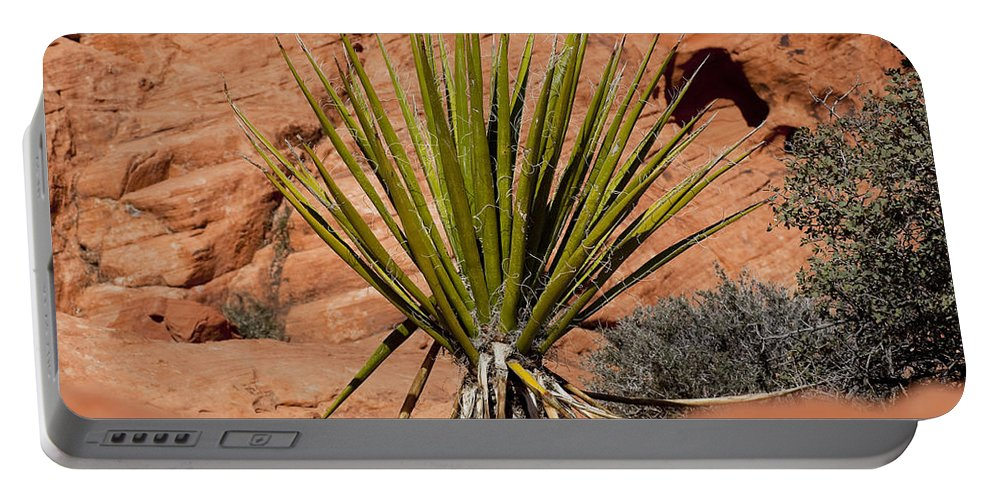 Yucca Plant Portable Battery Charger featuring the photograph Yucca Beauty by Kelley King