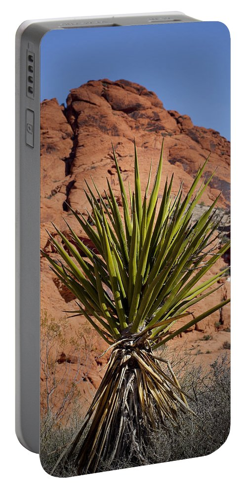 Yucca Plant Portable Battery Charger featuring the photograph Yucca by Kelley King