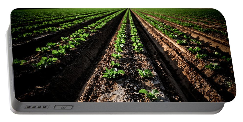 Lettuce Portable Battery Charger featuring the photograph Yuma Lettuce by Scott Sawyer
