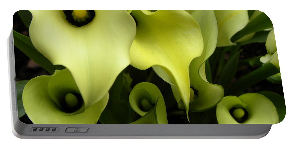 Flower Portable Battery Charger featuring the photograph Calla Lilies by Shannon Turek