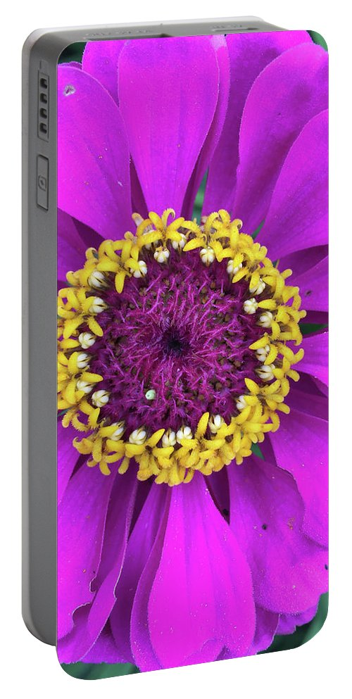 Flower Portable Battery Charger featuring the photograph Zany Zinnia by Cheryl O'Neil