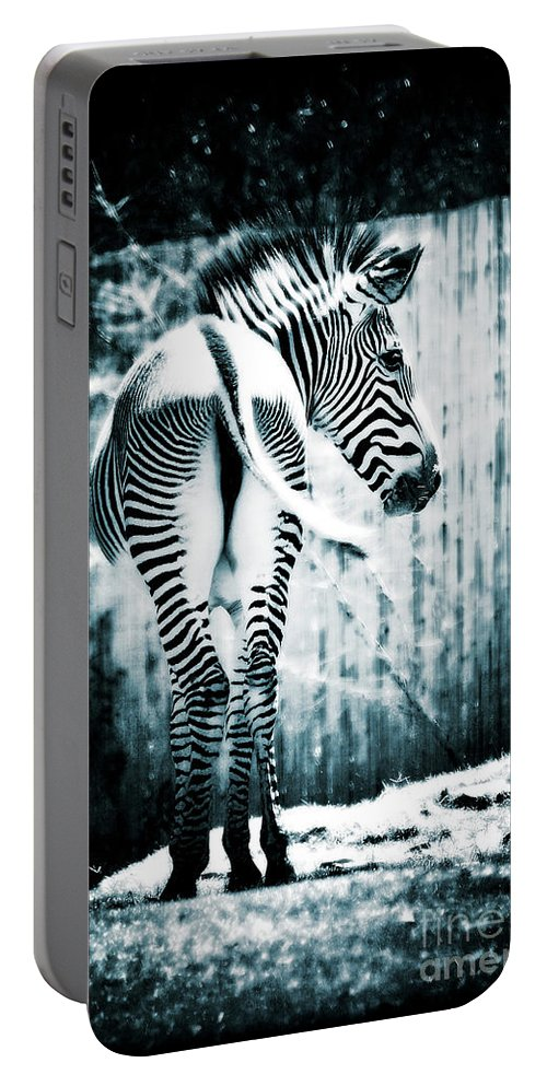 Zebra Portable Battery Charger featuring the photograph Zebra Blues by Saija Lehtonen