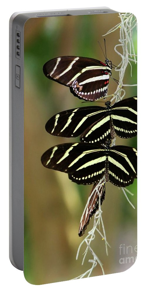 Zebra Portable Battery Charger featuring the photograph Zebra Butterflies Hanging On by Sabrina L Ryan