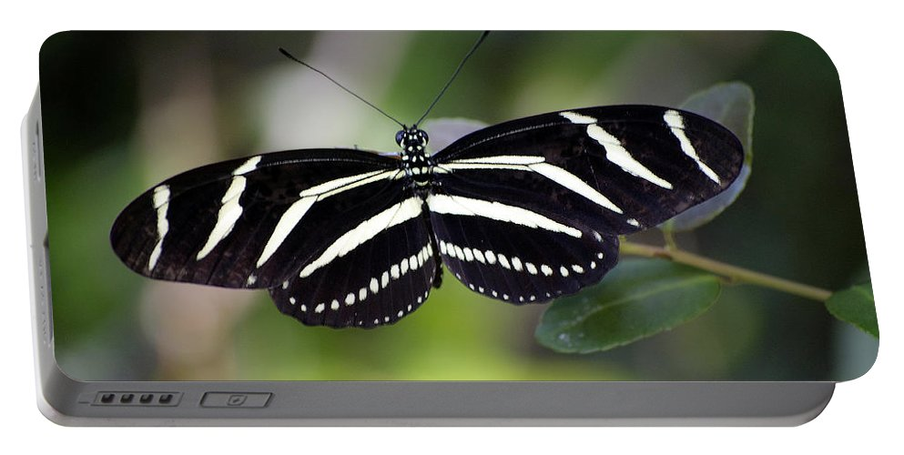 Butterfly Portable Battery Charger featuring the photograph Zebra Butterfly by Kenneth Albin