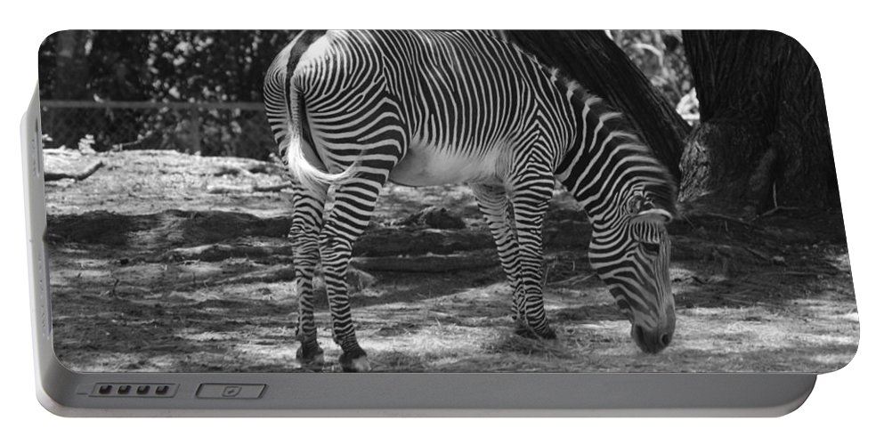 Animal Portable Battery Charger featuring the photograph Zebra In Black And White by Rob Hans