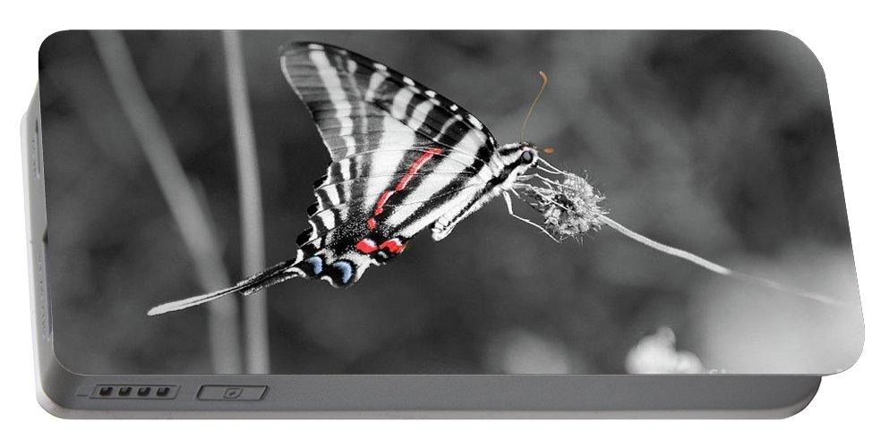 Zebra Portable Battery Charger featuring the photograph Zebra Swallowtail Butterfly 2016 by Karen Adams