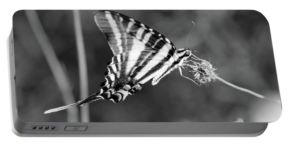 Zebra Portable Battery Charger featuring the photograph Zebra Swallowtail Butterfly Black And White by Karen Adams