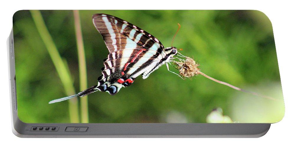 Zebra Portable Battery Charger featuring the photograph Zebra Swallowtail Butterfly In Garden 2016 by Karen Adams