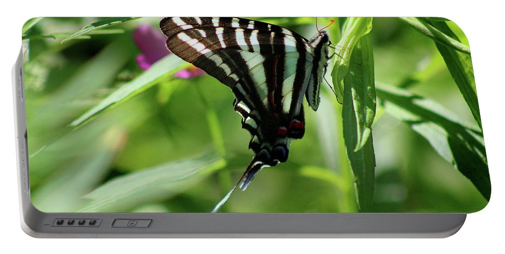 Zebra Portable Battery Charger featuring the photograph Zebra Swallowtail Butterfly In Green by Karen Adams