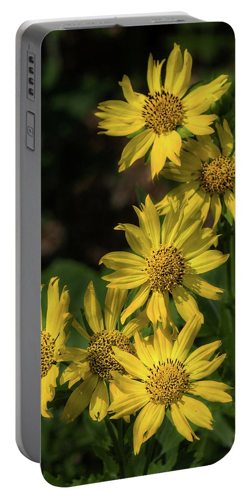 Zexmenia Portable Battery Charger featuring the photograph Zexmenia by David Werner