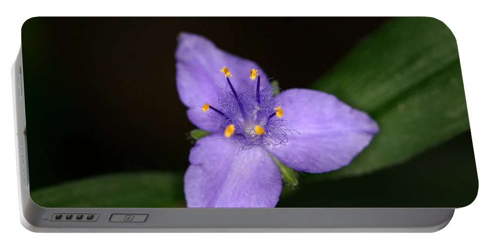 Zigzag Portable Battery Charger featuring the photograph Zigzag Spiderwort by Jack R Perry