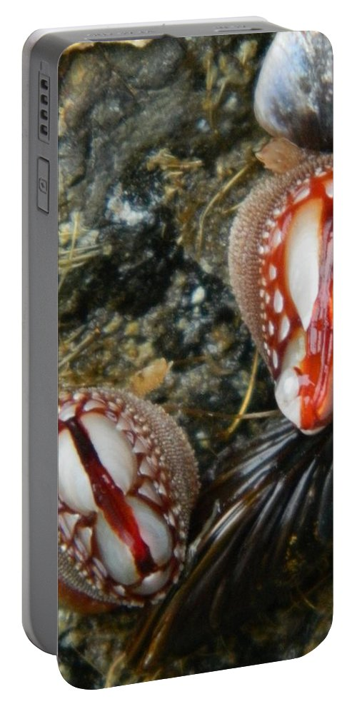 Clams Portable Battery Charger featuring the photograph Red And Gooey by Gallery Of Hope