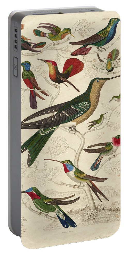 Trochilus Portable Battery Charger featuring the painting Trochilus, Hummingbirds by William Davis