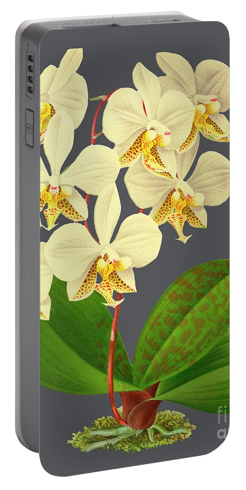 Vintage Portable Battery Charger featuring the mixed media Orchid Old Print by Baptiste Posters