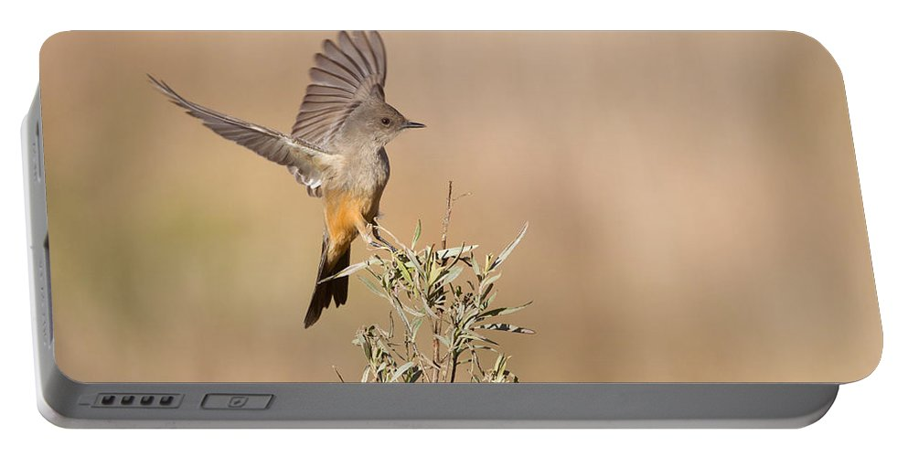 Animal Portable Battery Charger featuring the photograph Says Phoebe by James Zipp