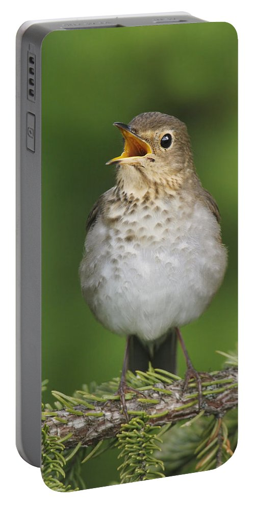 American Bird Portable Battery Charger featuring the photograph Swainsons Thrush by James Zipp