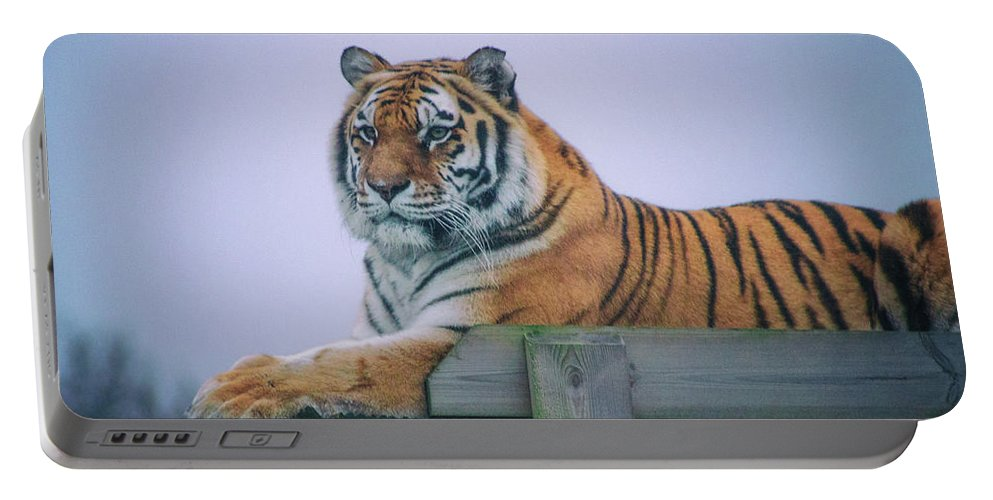 Tiger Portable Battery Charger featuring the photograph Amur Tiger by Martin Newman