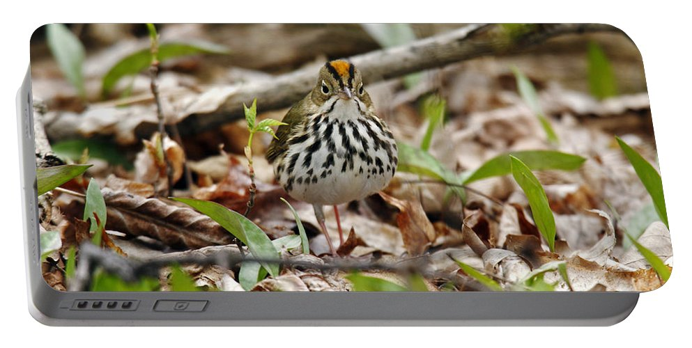 American Bird Portable Battery Charger featuring the photograph Ovenbird by James Zipp