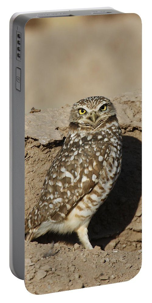 American Wildlife Portable Battery Charger featuring the photograph Burrowing Owl by James Zipp
