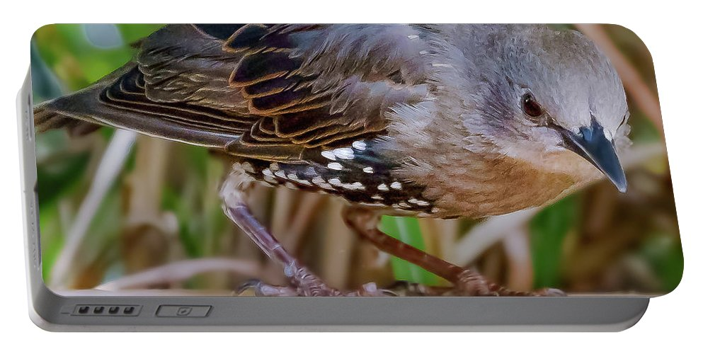 Bird Portable Battery Charger featuring the photograph Angry Bird by Joel Friedman