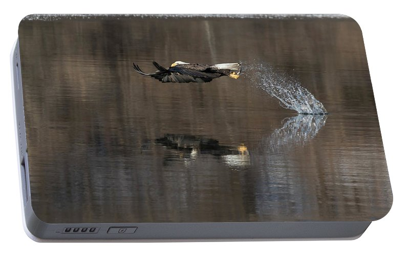 Bald Eagle Portable Battery Charger featuring the photograph Bald Eagle 2018-13 by Thomas Young