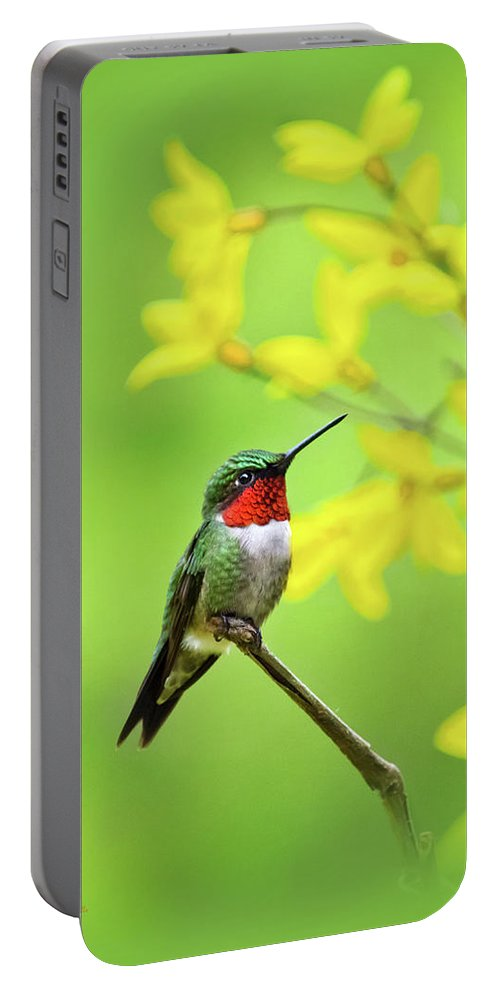 Hummingbird Portable Battery Charger featuring the photograph Beautiful Summer Hummer by Christina Rollo