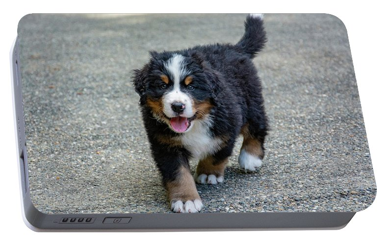 Dog Portable Battery Charger featuring the photograph Bernese Mountain Dog Puppy 2 by Pelo Blanco Photo
