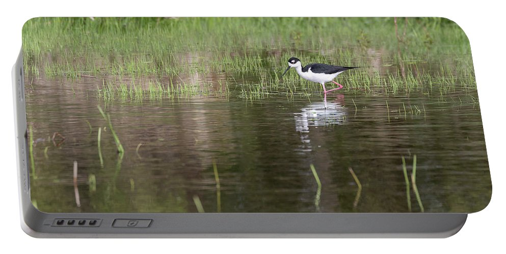 Black-necked Stilt (himantopus Mexicanus) Portable Battery Charger featuring the photograph Black-necked Stilt 2018-1 by Thomas Young