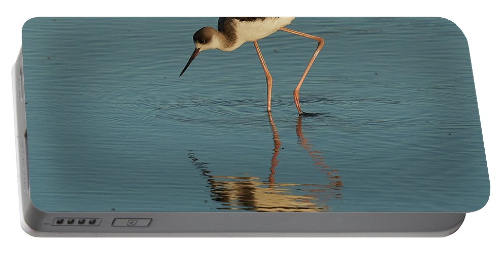 Muddy Portable Battery Charger featuring the photograph Black-winged Stilt by Pablo Avanzini