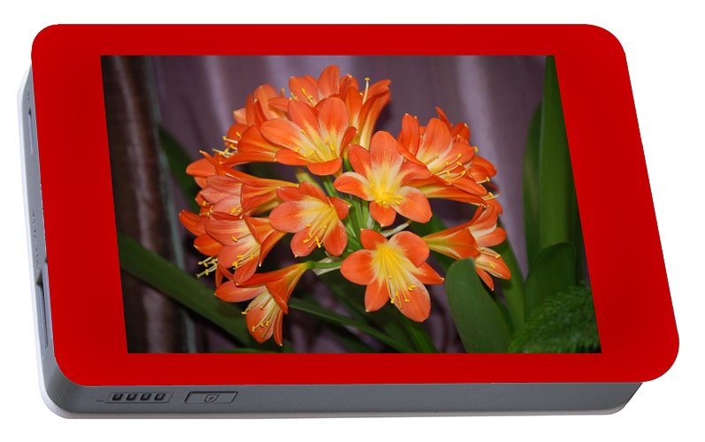 Flowers Portable Battery Charger featuring the photograph Clivia Blossoms by Nancy Ayanna Wyatt
