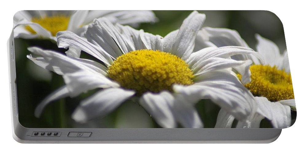 Daisy Portable Battery Charger featuring the photograph Colorful Blooming Daisies 004 by Mrsroadrunner Photography